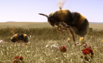 bees_th2