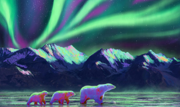 Aurora Bears Concept