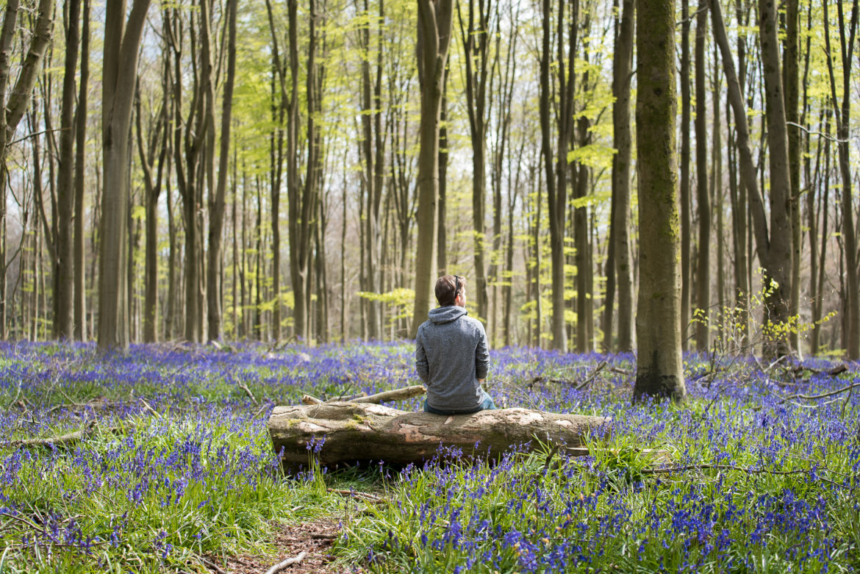 Bluebells at West Woods, England - Photography - Alastair Dixon - CGI / VFX Lighting Supervisor ...